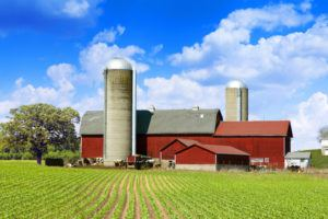 Cows Milk Farm